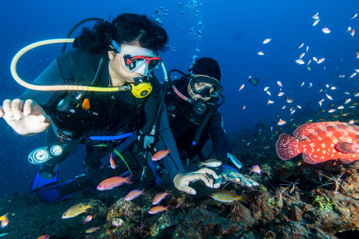 Tulamben - USAT, Coral Garden-35